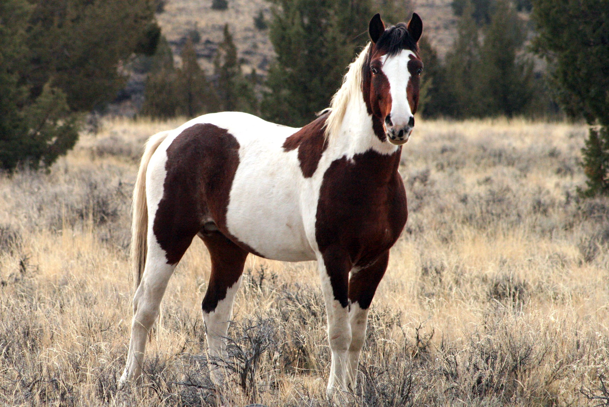 Where to see wild horses Steens Mountains Oregon