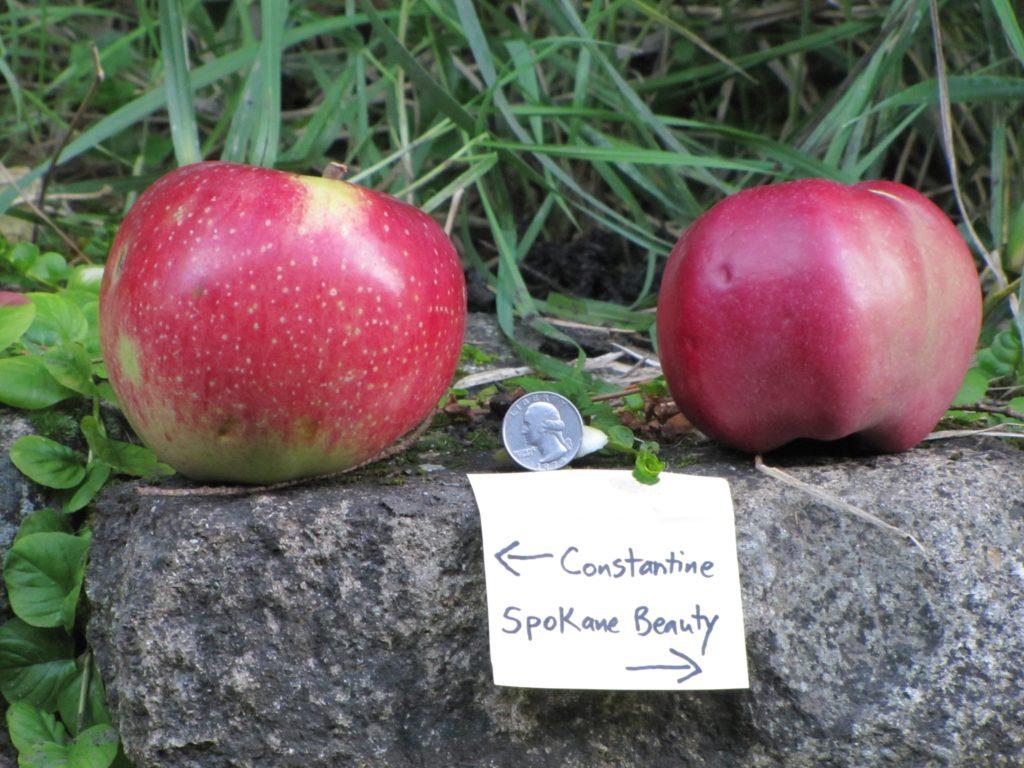 Lost Apple Varieties USA