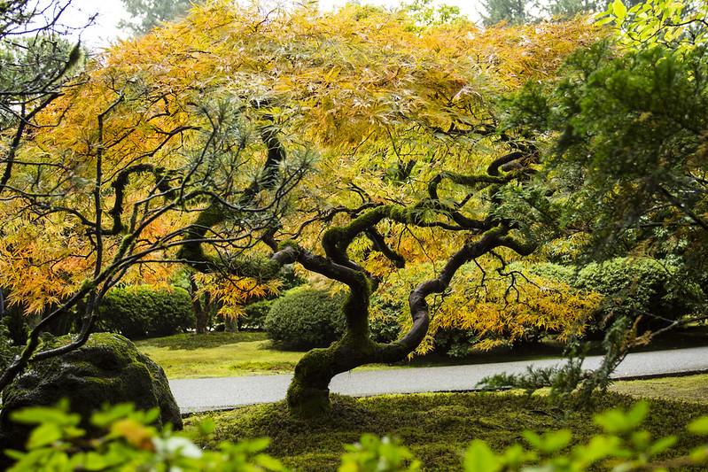 Take A Virtual Tour Through This Famous Japanese Garden In Oregon That Oregon Life