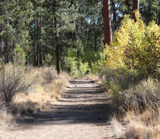 Shevlin Park Bend Oregon