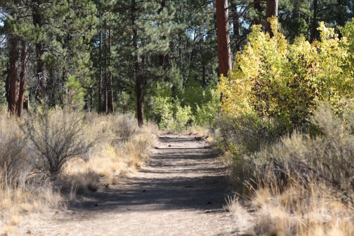Shevlin Park Bend Oregon