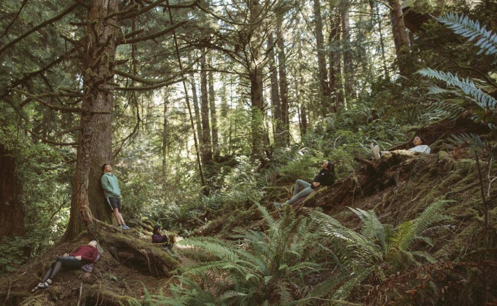 Lush forest around Salishan Coastal Lodge