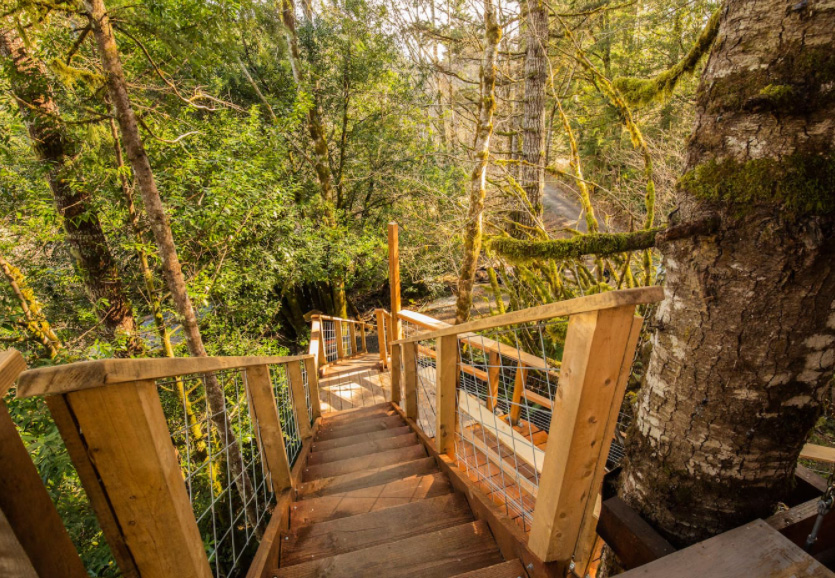 stairs leading out of a treehouse in the forest