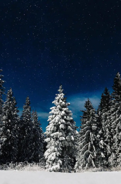 Mount Hood National Forest In The Snow
