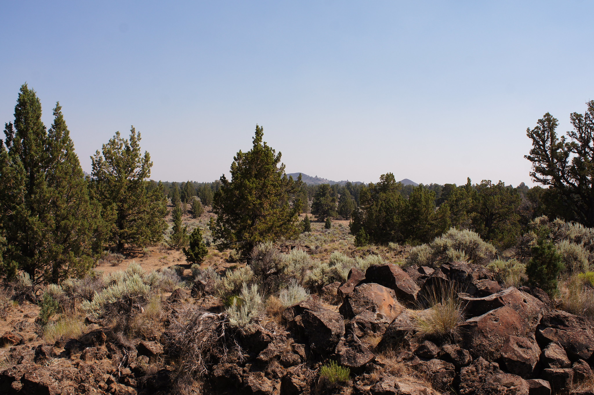Oregon's high desert with sage brush and mountains.