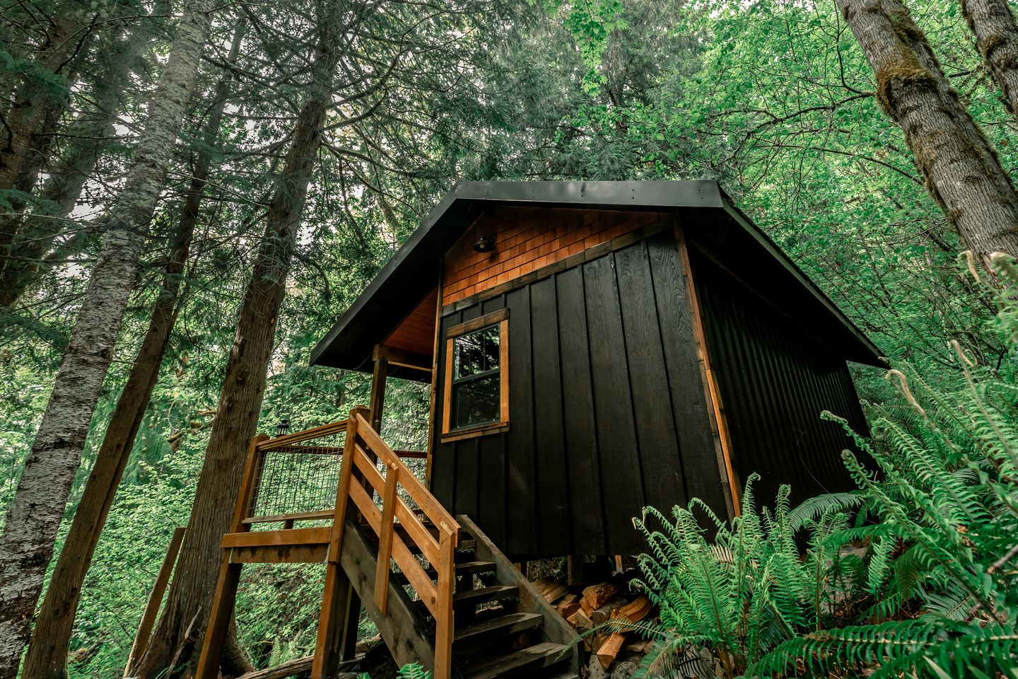 The black siding of the cabin