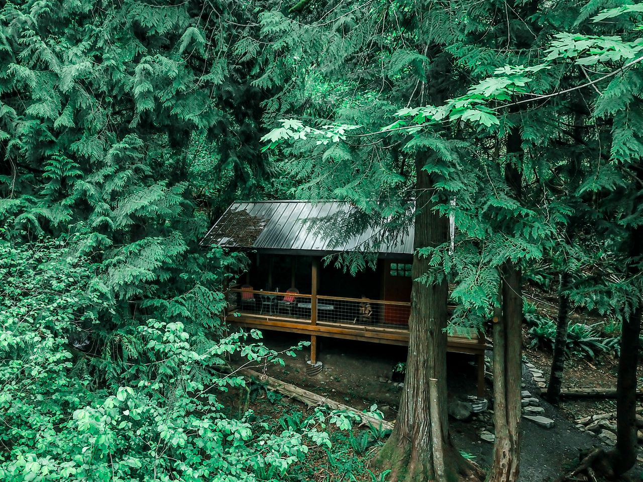 A gorgeous cabin surrounded by trees