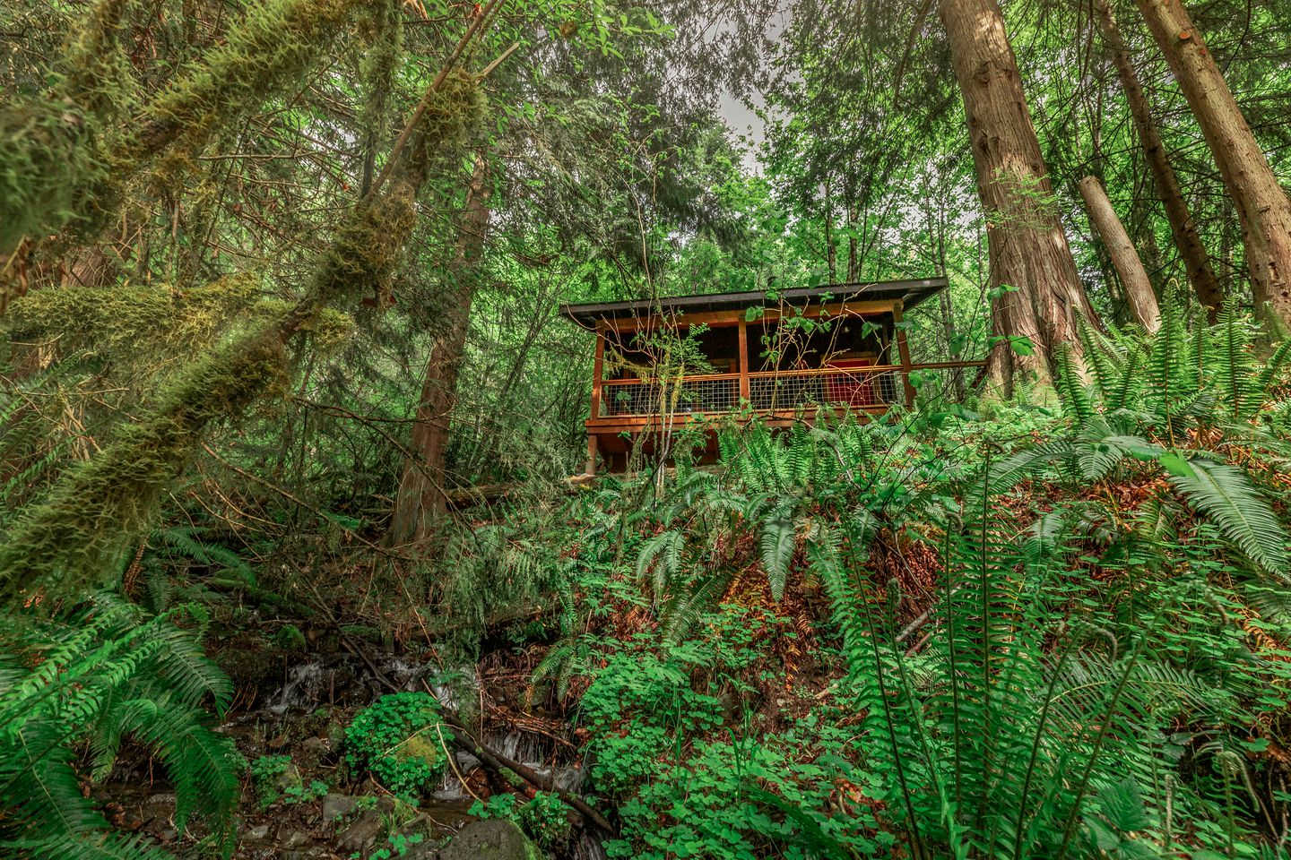 The cabin sitting in a dense forest with ferns