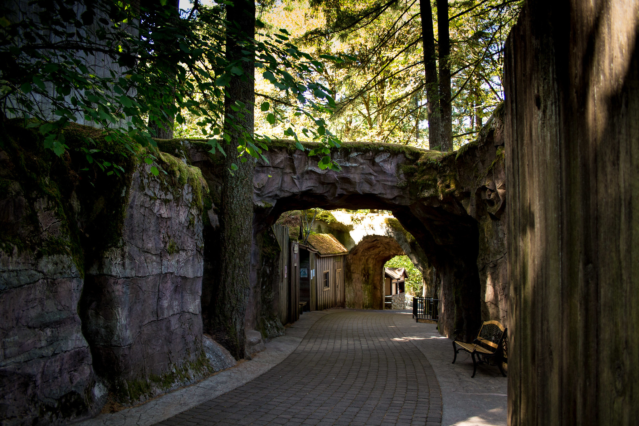 A forested walkway.