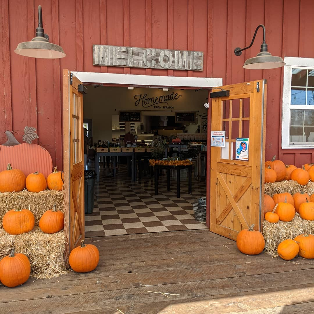 Pumpkins in front of a red barn