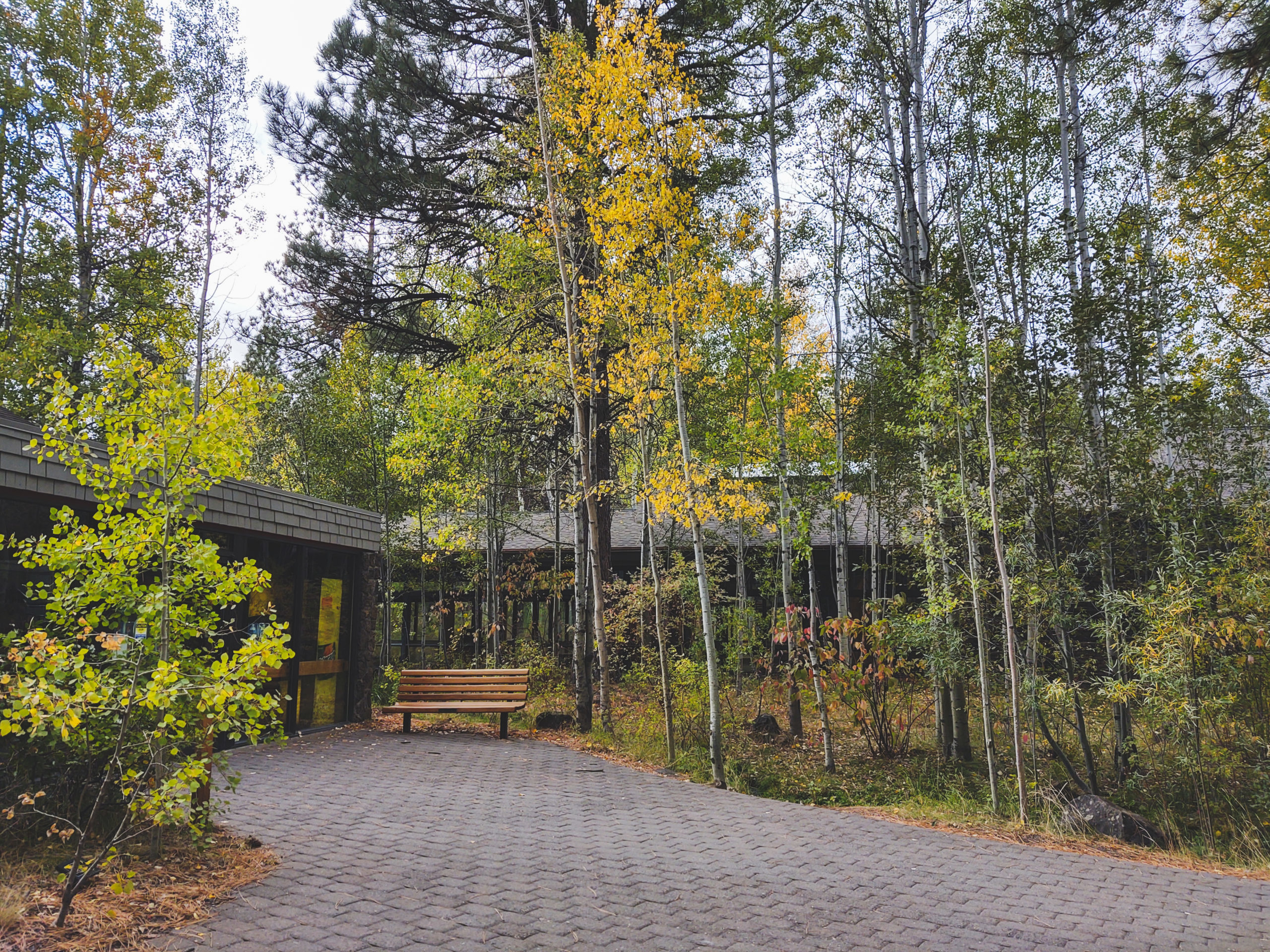 The outside of the High Desert Museum in fall with quaking aspen.