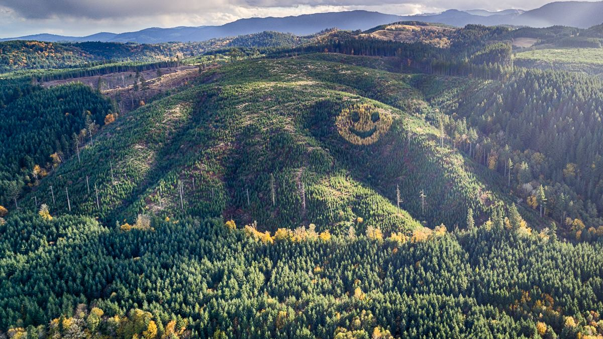 forest smiley face made out of trees highway 20 oregon