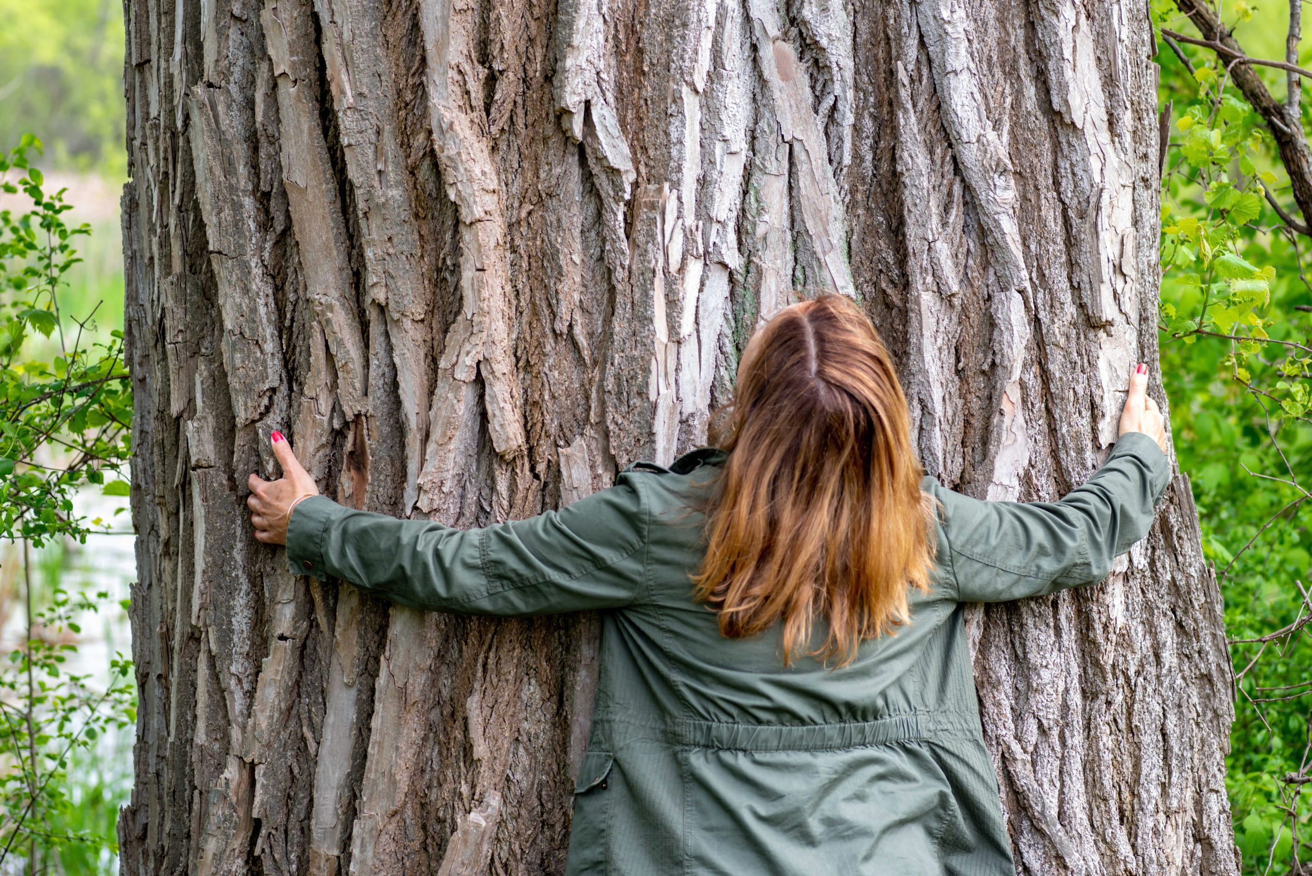 A woman hugs an enormous tree